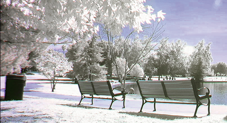 Panasonic VariCam LT: Infrared (IR) Shooting in Daylight. The Cinema VariCam LT has an integrated, detachable IR cut filter. User can do the IR shooting to record 4K images in dark unlit nightscapes. This is ideal for capturing nocturnal wildlife and other scenes with no illumination. Also, the IR filter can be used in daylight as a creative tool for achieving a unique look. Image Courtesy of Panasonic
