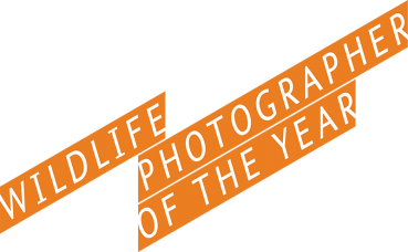 ROM Wildlife Photographer of the Year Contest for Legal Residents Ages 13 and Older in Ontario, Canada: Share Your Wildlife / Natural World Images and Include @ROMtoronto and #ROMWpy JR before 11:59 PM EST on January 31, 2017