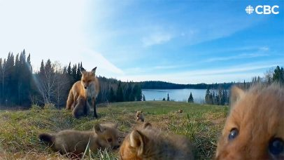 Candid Camera: Nature Cams Spy Adorable Quebec (Canada) Wilderness Creatures